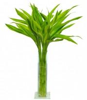 Bambuzinho Da Sorte