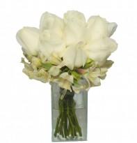 Mimo de  Rosas Brancas
