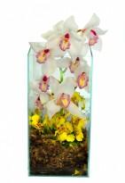 Arranjo de Orquídea Luxo