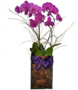 Orquídeas Top
